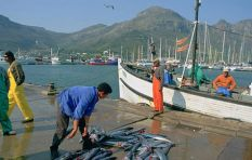 'Cape's 12 fishing harbours slipped into state of serious decline' - Zille