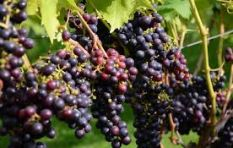 The Wine Feature: Complex and fruity reds
