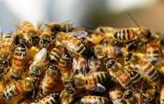 6 ways to avoid being stung when confronted by a swarm of bees