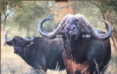 Wildlife artist, Karin Kruger, commissioned to paint a Buffalo worth R168m