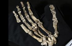 #The411 - What's it like being related to #HomoNaledi?