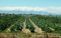 WC government to conduct study on the future of Phillipi Horticultural area