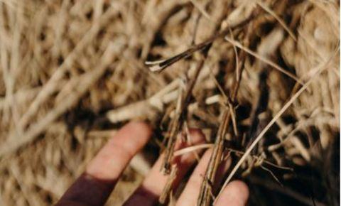 hay-fingers-farm-pexels-imagejpg