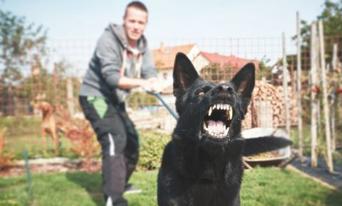 aggressive-dog-is-barking on leash-123rfjpg