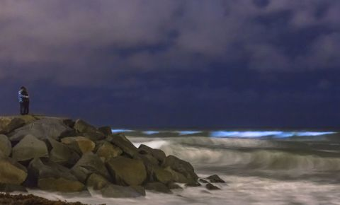 beach-bioluminescence-tide-ocean-glow-blue-123rf