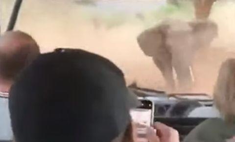 elephant-charging-carpng