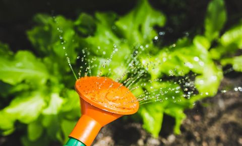 watering-can-garden-pixabayjpg