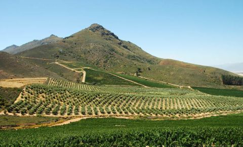 winelands-1384576.jpg