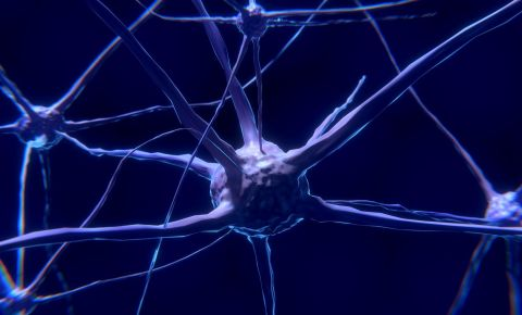 Nerve Cell Neuron Brain