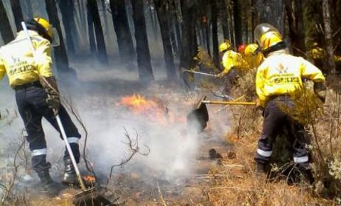 fire-fighters-forestjpg