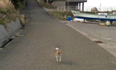 dog-captured-on-google-street-maps-image-courtedy-google-mapsjpg