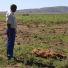 Ramaphosa's new advisory team has 6 months to draw up national land reform plan