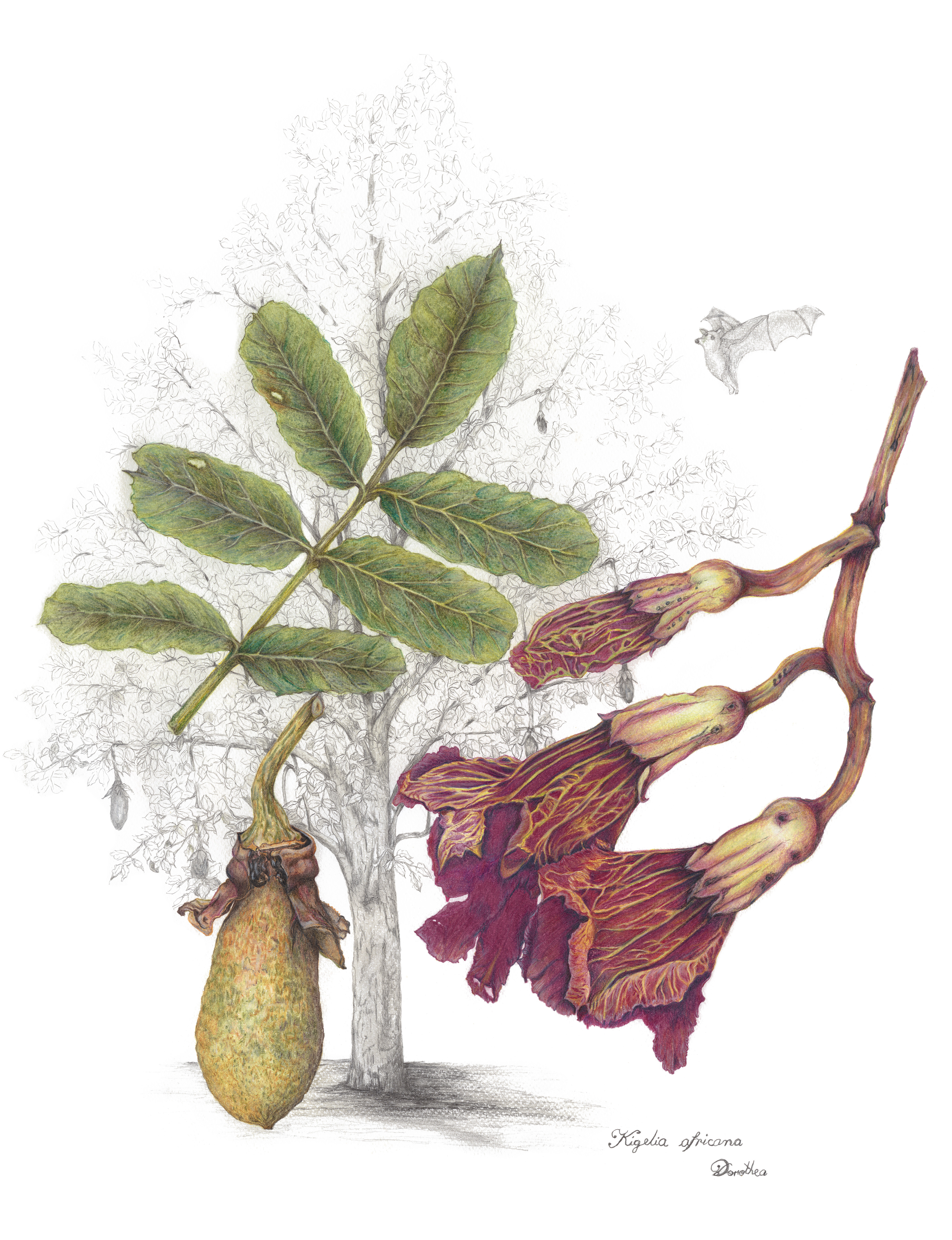 Wild Harvest Botanical Art Exhibition