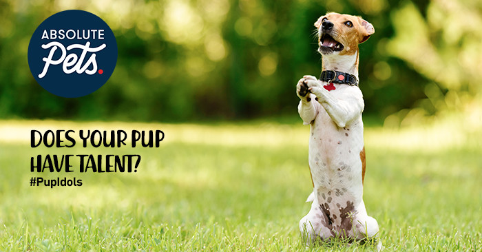 Does your pup have talent? Win with #PupIdol!