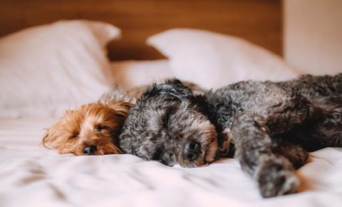 animals-pets-dogs-puppies-puppy-dog