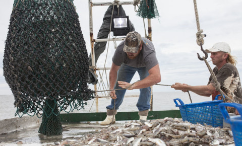 Deckhands bring in net with fish on commercial fishing boat 123rf
