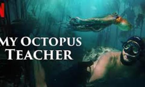my-octopus-teacher-netflixjpg