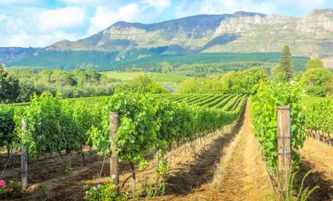 wine-farm-stellenboschjpg