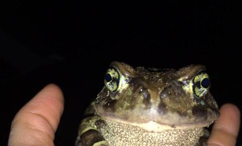 leopard-toad-toadnutsjpg