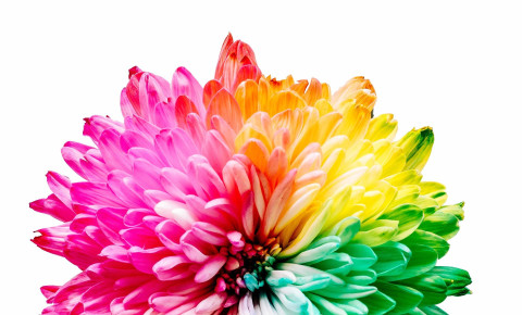 Flower Unsplash