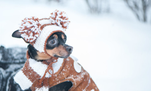 Funny dog in snow cute knitted jersey 123rf 123rflifestyle