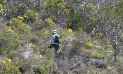 HWS monitors in Hangklip Nature Reserve by Melinda Ridgard