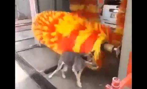 dog-uses-carwash-rollerspng