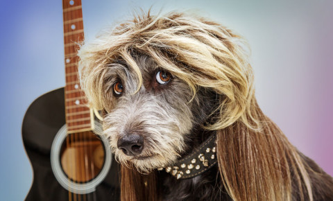 Dog with a mullet and guitar 123rf
