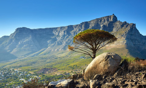 Table Mountain National Park Cape Town SANParks 123rflifestyel 123rf