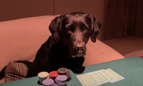 Andrew Cotter, Mabel and Olive play poker