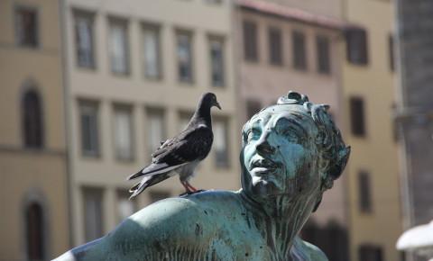 Pigeon statue shit pixabay