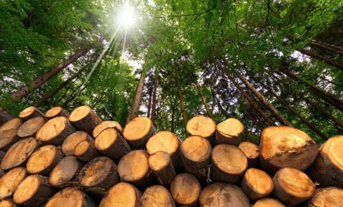 123rf Timber tree trunk wood logs