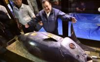 President of sushi restaurant chain Sushi-Zanmai, Kiyoshi Kimura (R), displays a 278kg bluefin tuna at his main restaurant in Tokyo on 5 January 2019. Picture: AFP.