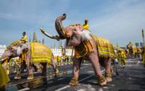 Mahouts ride on their elephants as they march with well-wishers during a procession near the Grand Palace to pay their respects to Thailand's King Maha Vajiralongkorn in Bangkok on May 7, 2019. Picture: AFP.