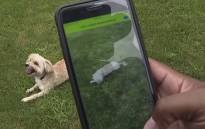 An idea from his six-year-old daughter leads one Michigan man to create an app that identifies breeds of dogs. Picture: CNN