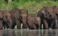 A group of elephants at the Mudumalai Tiger Reserve in India. Picture: mudumalaitigerreserve.com