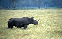 A black rhino. Picture: WWF