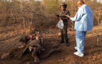 A dead juvenile rhino, killed by desperate poachers who did not want to leave the Kruger National Park empty handed. Picture: Vumani Mkhize/EWN.