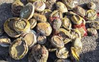 Hawks detectives arrested two men in connection with a R3 million abalone bust after conducting a search and seizure operation in Edgemead on 5 August 2020. Picture: @SAPoliceService/Twitter