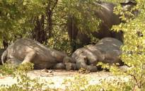 A herd of elephants snoozing in Zimbabwe's Hwange National Park. Picture: Julian Brookstein Safaris