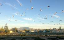 FILE: Birds have moved into areas of Robben Island left vacant after many residents left. Picture: Aletta Gardner/EWN