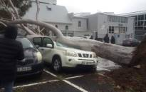 A is crushed by an uprooted tree in a parking lot in Wynberg, Cape Town as heavy rain and gale-force winds lash the city during a storm on 27 June 2020. Picture: Supplied