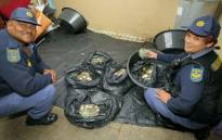 South African Police Service members seen with bags of abalone seized in  Burgundy Estate, Cape Town. Picture: @SAPoliceService/Twitter