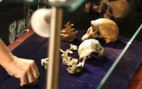 Scientist piece together the skeleton of Neo, discovered in the Rising Star cave.  Picture: Christa Eybers/EWN