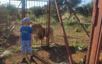 An image taken of a 10-year-old French boy at the Tau Thaba Game and Lion Lodge just before he was attacked by a tiger. Picture: Supplied.