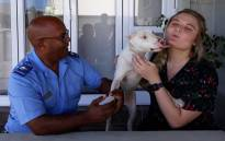 Pitbull Cooper and his new owner Suné Human (R) and the Animal Welfare Society's Allan Perrins (L). Picture: Lizell Persens/EWN