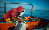 FILE: A fisherman looks at his catch in the village of Paternoster. Picture: AFP.