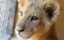 FILE: Picture: Campaign Against Canned Hunting.