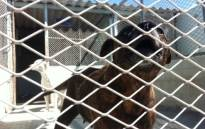 The NSPCA has called for the harshest punishment possible for those found violating the Animals Protection Act. Picture: EWN.
