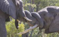 Zimbabwe's parks and wildlife authority doesn't receive funding from the government. Picture: bhejanetrust.org